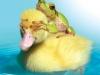 004 Duck, Duck, Frog