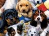 020 Puppy Pals