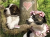 """110 \""""Dog Love\"""""""